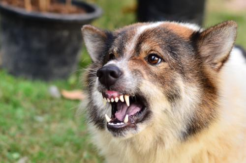 Schedule a free consultation with our Brockton dog bite lawyers today.